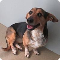 Adopt A Pet :: Gilda Radner - Jersey City, NJ