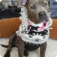 Adopt A Pet :: Gisela - Framingham, MA