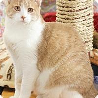 Adopt A Pet :: Marissa - St Louis, MO
