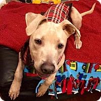 Adopt A Pet :: Dakota 3 - Houston, TX