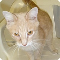 Adopt A Pet :: Edward - Hamburg, NY