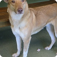 Adopt A Pet :: Aurora + - Cleveland, MS