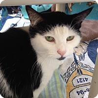 Adopt A Pet :: Joon - Chicago, IL