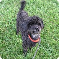 Adopt A Pet :: Quest - Mukwonago, WI