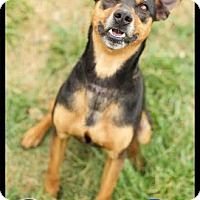 Adopt A Pet :: Oliver (reduced fee) - Harrisonburg, VA