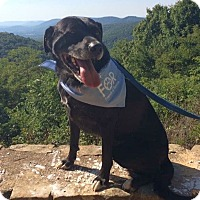 Adopt A Pet :: JoJo - Chattanooga, TN
