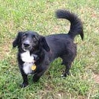 Adopt A Pet :: Diego - Winder, GA