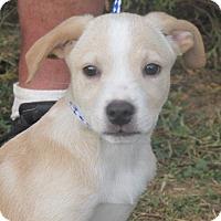 Adopt A Pet :: Bush - Germantown, MD
