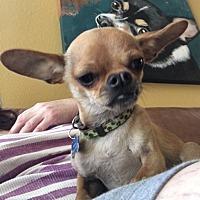 Adopt A Pet :: Peanut - Vacaville, CA