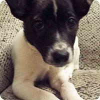 Adopt A Pet :: Matthew - Oswego, IL