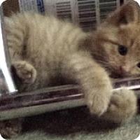 Adopt A Pet :: Deuce - Kirkwood, DE
