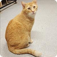 Adopt A Pet :: Willie - Indianola, IA