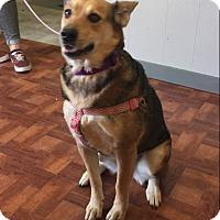Adopt A Pet :: Annabelle - San Antonio, TX