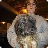 Adopt A Pet :: Jazzy - Glastonbury, CT