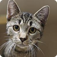 Adopt A Pet :: Obie - Lancaster, PA