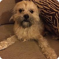 Adopt A Pet :: Cody - Palm Harbor, FL