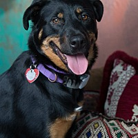 Adopt A Pet :: Maggie May - Van Nuys, CA
