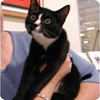 Adopt A Pet :: Munson - Clementon, NJ
