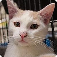 Adopt A Pet :: Jonah - Santa Monica, CA