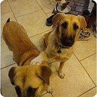 Adopt A Pet :: Scrappy and Scuba Doo - Newcastle, OK