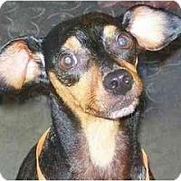 Adopt A Pet :: Rocky T - Nashville, TN