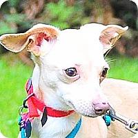 Adopt A Pet :: VALDO - Portland, OR