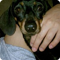 Adopt A Pet :: HARLO - Portland, OR