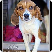 Adopt A Pet :: Fern - Albany, NY