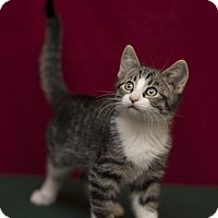 Adopt A Pet :: Joey - Fountain Hills, AZ