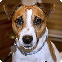 Adopt A Pet :: MILO - wonderful personality! - Terra Ceia, FL