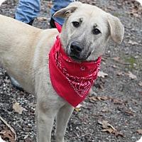Adopt A Pet :: Kaizlee - Oakland, AR