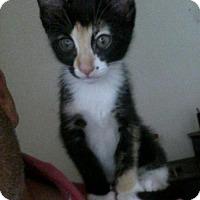 Adopt A Pet :: Mae - Tustin, CA
