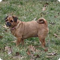 Adopt A Pet :: sherri - mooresville, IN