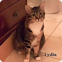 Adopt A Pet :: Lydia - Bentonville, AR