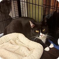 Adopt A Pet :: Alfalfa - Berkeley Hts, NJ