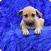 Adopt A Pet :: Liza - Groton, MA