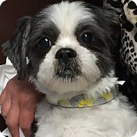 Adopt A Pet :: Ben - Schaumburg, IL
