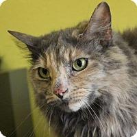 Adopt A Pet :: Foxy - Red Bluff, CA