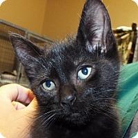 Adopt A Pet :: Riddick - Grants Pass, OR