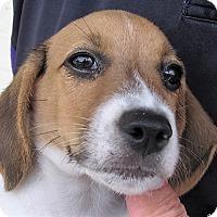 Adopt A Pet :: Randy - Germantown, MD