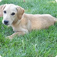 Adopt A Pet :: Endia - New Oxford, PA