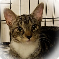 Adopt A Pet :: Emeril - Trevose, PA