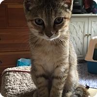 Adopt A Pet :: Celia - Covington, KY
