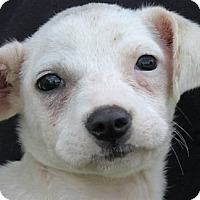Adopt A Pet :: Annabelle - Germantown, MD