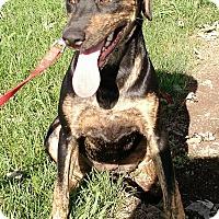 Adopt A Pet :: Hilda - Macomb, IL