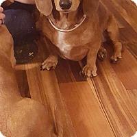 Adopt A Pet :: BO - Lubbock, TX