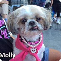 Adopt A Pet :: Molly - Lake Forest, CA