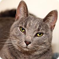 Adopt A Pet :: MOXIE - Royal Oak, MI