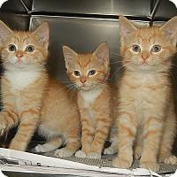 Adopt A Pet :: Jean, Jamie, and Jasper - Newport, NC