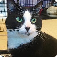 Adopt A Pet :: Extravaganza - Salisbury, MA